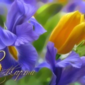 Милых дам с весенним праздником!